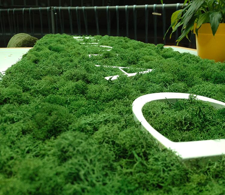 Jungle   Moss setting
